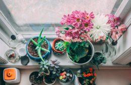 kwantum bloempottenactie