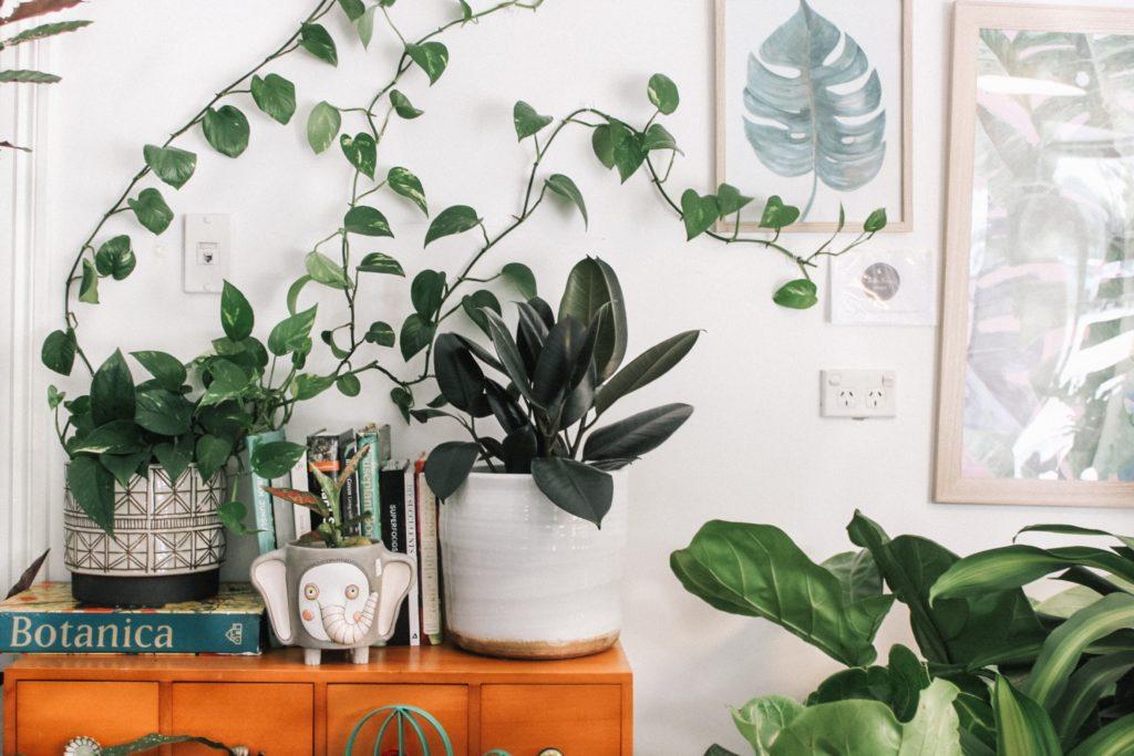 bijzetkastje in de woonkamer met planten