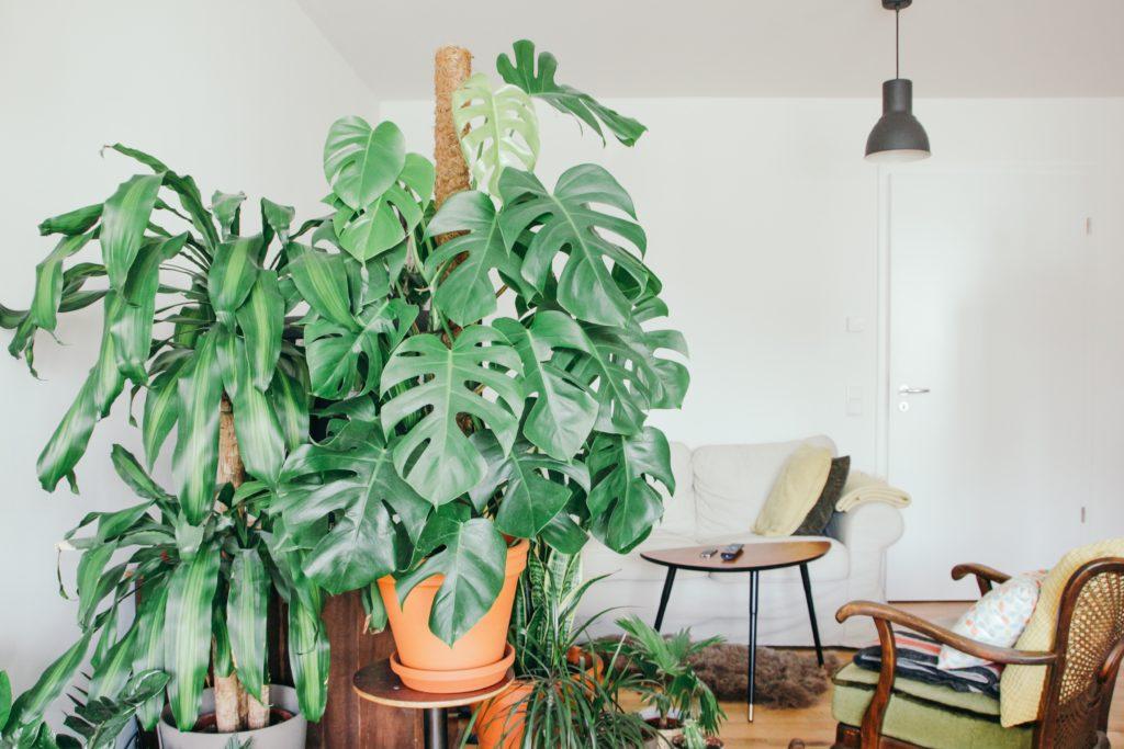grote kamerplanten inspiratie