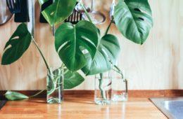inspiratie voor planten in de woonkamer