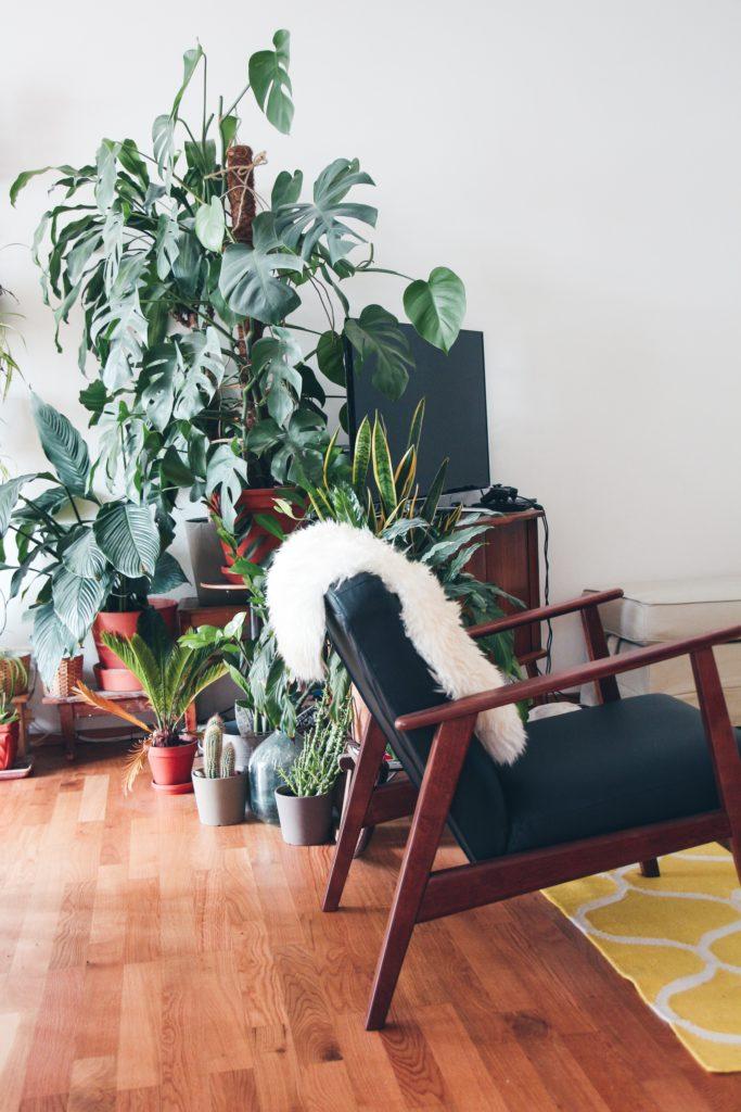 planten in de hoek van de woonkamer